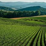 畑のイメージ